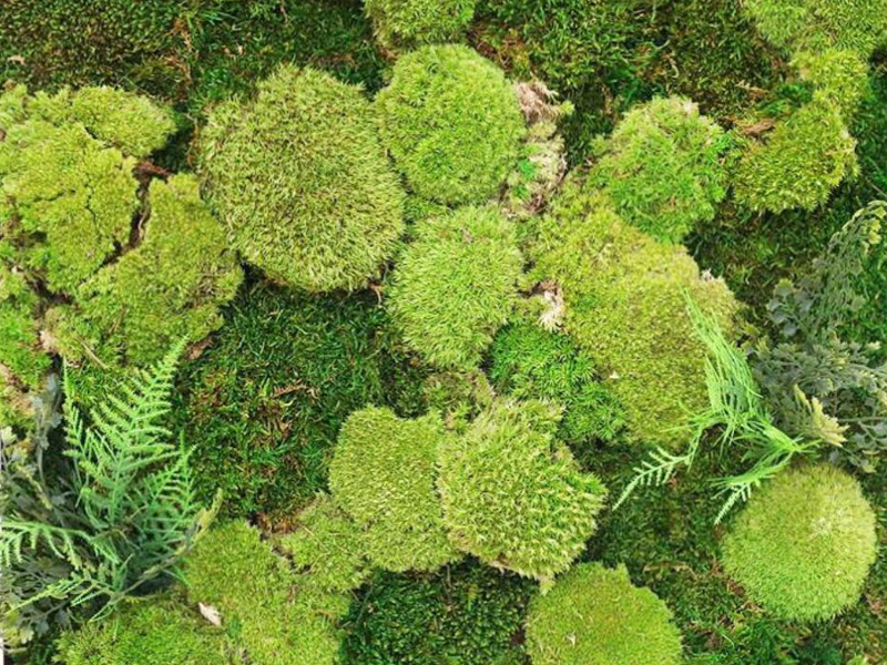 CUBESYSTEM NATURAL PRESERVED MOSS 301 401 - Moss