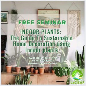 100841085 251713052576891 9094350424713986048 n 300x300 - The guide to Sustainable Home Decoration using indoor plants - Free Seminar Part 3