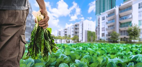 90176421 202731211031203 6653843324434120704 n - The Ncov Pandemic raises the need for urban farming to help barangays sustain itself on a crisis.