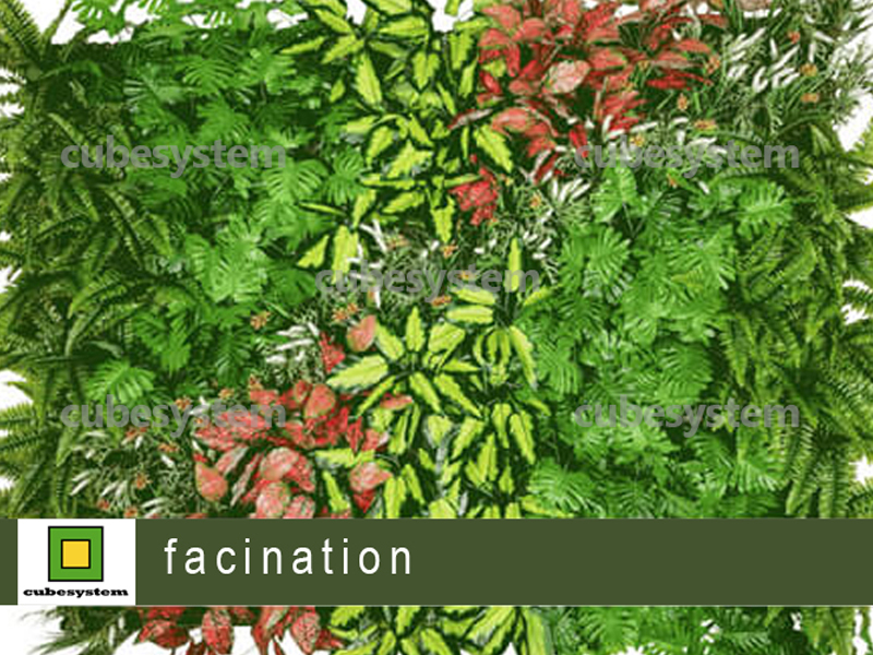 ARTIFICIAL GREENWALL FACINATION BY CUBESYSTEM 1 - Artificial Green Wall