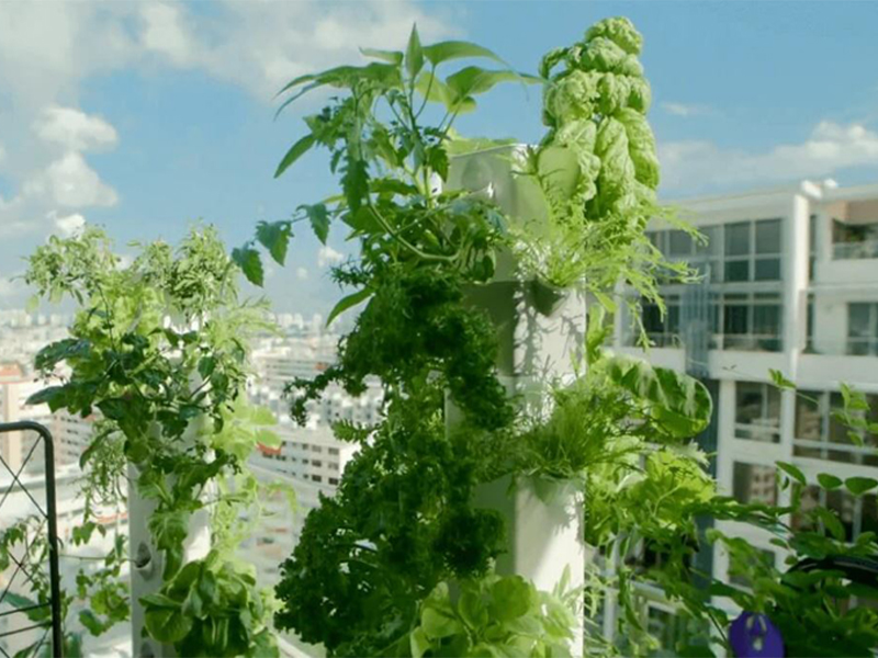 Aeroponic tower for small space set ups like condo living