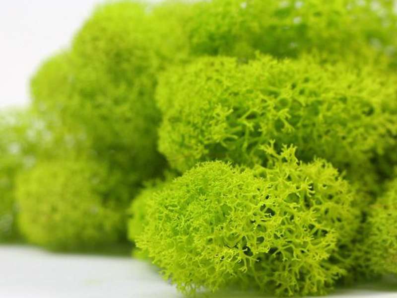 PRESERVED NATURAL MOSS BY CUBESYSTEM - Our Products