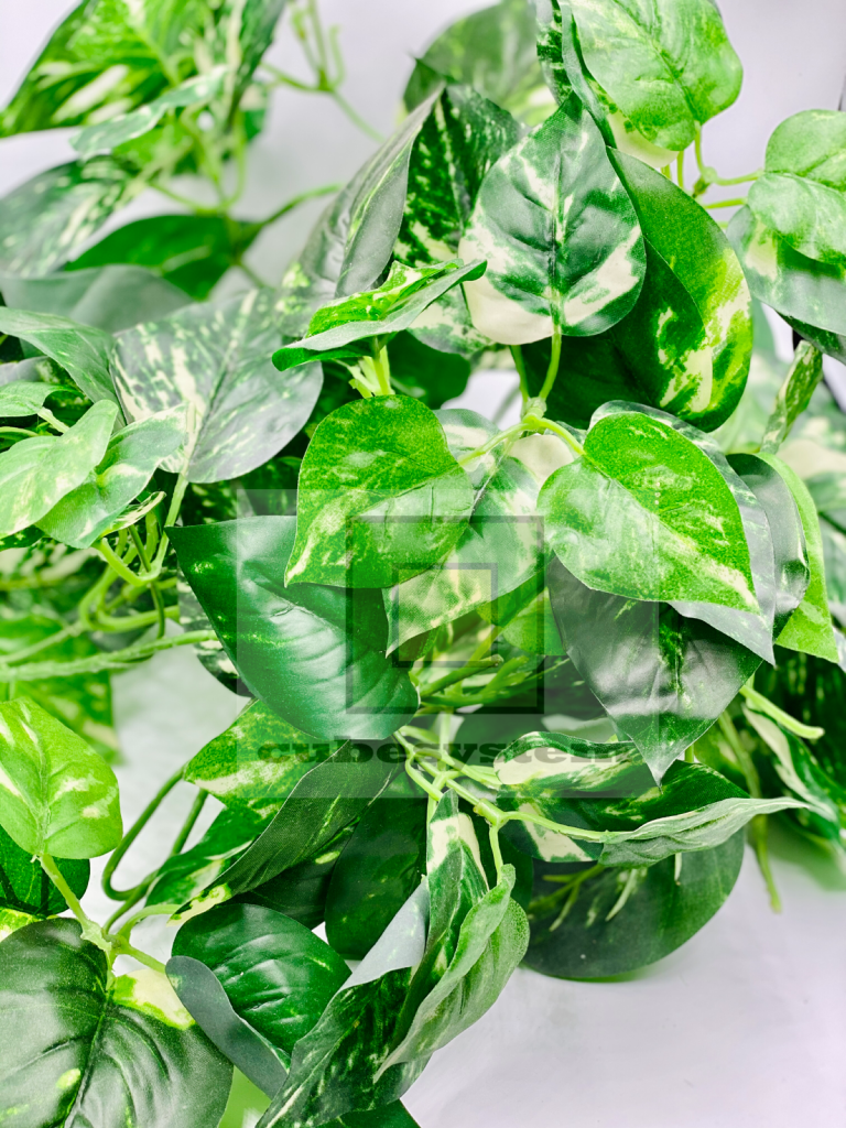 SRE POTHOS BUNCH GREEN