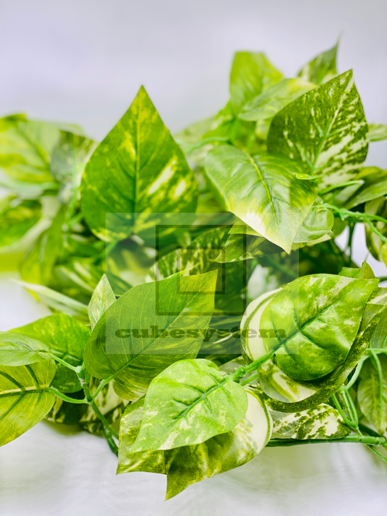 SRE POTHOS BUNCH LIME